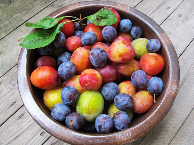 IMG_6450_plums